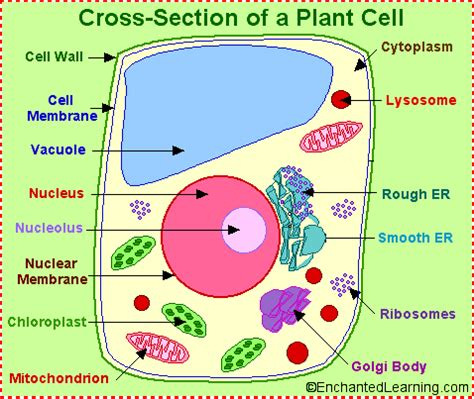 Animal cell project essay